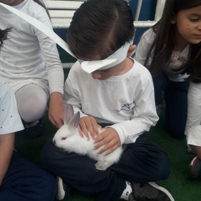 2019_04_17 - Páscoa educação infantil e 1º anos166